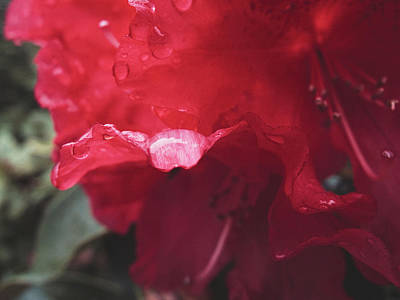 Photograph - Rhododendron #2 - May 2015 by Desmond Manny