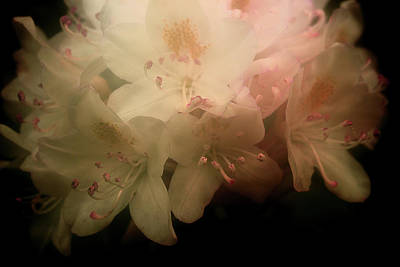 Photograph - Rhododendron 3 by Mike Eingle