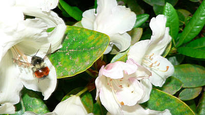 Art Print featuring the photograph Rhododendron And Bee by Larry Keahey