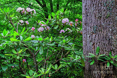Photograph - Rhododendron And Poplar Trunk by Thomas R Fletcher