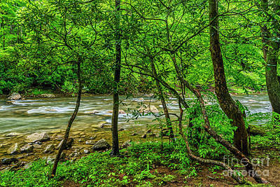 Photograph - Rhododendron Back Fork Of Elk River by Thomas R Fletcher