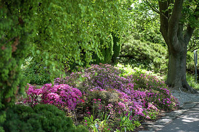 Photograph - Rhododendron Bloom In Botanical Garden Mendelu by Jenny Rainbow