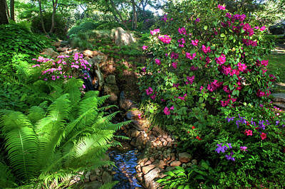 Photograph - Rhododendron Blooms In Japanese Garden 3. Prague by Jenny Rainbow