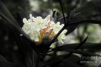 Photograph - Rhododendron Blooms by Mike Eingle