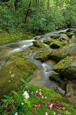 Photograph - Rhododendron Blossom On Cold Springs Creek by Alan Lenk
