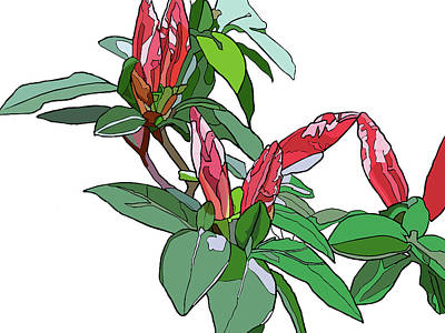 Rhododendron Buds Art Print