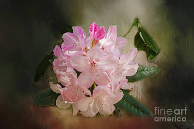 Photograph - Rhododendron by Elaine Teague