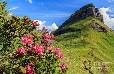 Photograph - rhododendron flowers in Dolomites by Antonio Scarpi