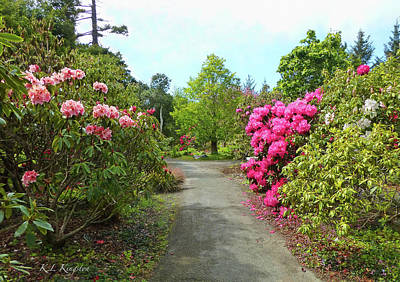 Photograph - Rhododendron Gardens by K L Kingston