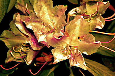 Digital Art - Rhododendron Glory 11 by Lynda Lehmann