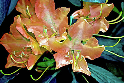 Stamen Digital Art - Rhododendron Glory 15 by Lynda Lehmann