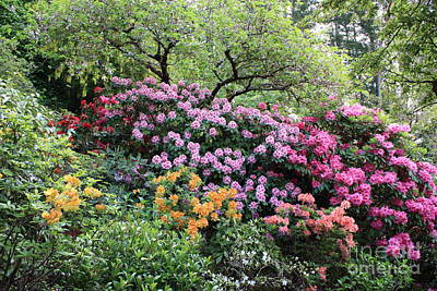 Photograph - Rhododendron Hill by Carol Groenen