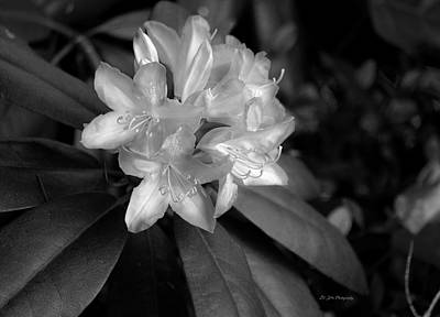Photograph - Rhododendron In Black And White by Jeanette C Landstrom