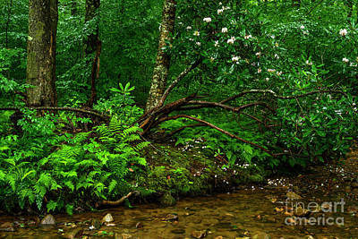 Photograph - Rhododendron In The Woods by Thomas R Fletcher