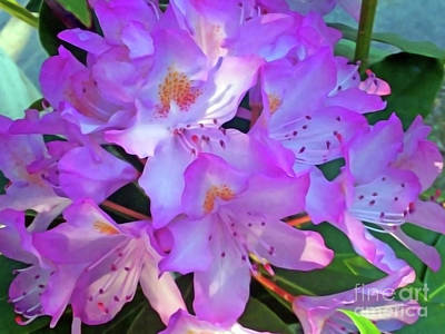 Photograph - Rhododendron by Jasna Dragun