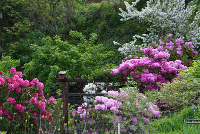 Photograph - Rhododendron Landscape by Cascade Colors