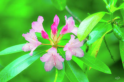Photograph - Rhododendron by Leland D Howard