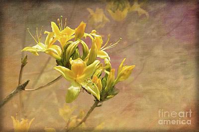 Digital Art - Rhododendron Luteum  by Liz Alderdice