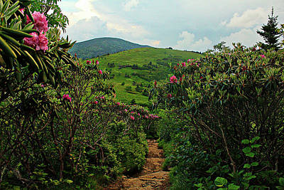 Photograph - Rhododendron Road by Jessica Brawley