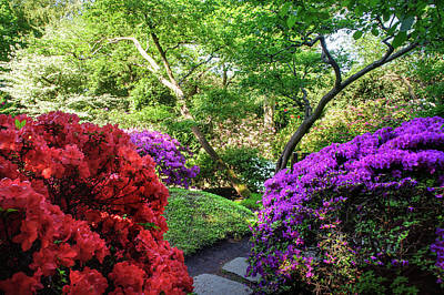 Photograph - Rhododendrons Blooms In Japanese Garden 10. Prague by Jenny Rainbow