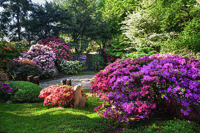 Photograph - Rhododendrons Blooms In Japanese Garden 12. Prague by Jenny Rainbow