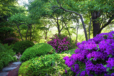 Photograph - Rhododendrons Blooms In Japanese Garden 13. Prague by Jenny Rainbow