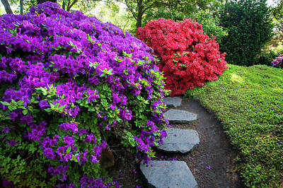 Photograph - Rhododendrons Blooms In Japanese Garden 14. Prague by Jenny Rainbow