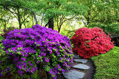 Photograph - Rhododendrons Blooms In Japanese Garden 15. Prague by Jenny Rainbow