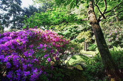 Photograph - Rhododendrons Blooms In Japanese Garden 16. Prague by Jenny Rainbow