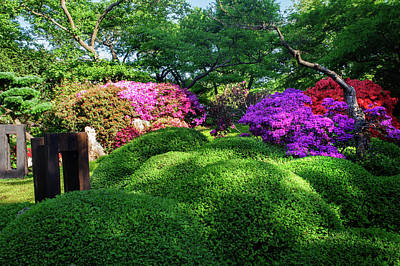 Photograph - Rhododendrons Blooms In Japanese Garden 18. Prague by Jenny Rainbow