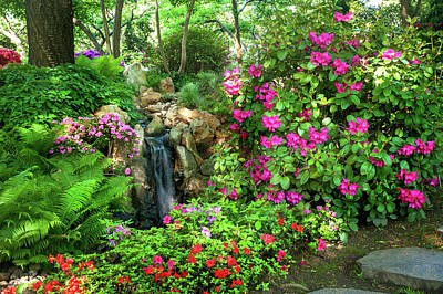 Photograph - Rhododendrons Blooms In Japanese Garden 2. Prague by Jenny Rainbow