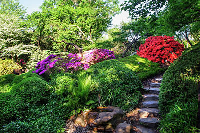 Photograph - Rhododendrons Blooms In Japanese Garden 5. Prague by Jenny Rainbow
