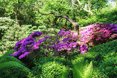 Photograph - Rhododendrons Blooms In Japanese Garden 6. Prague by Jenny Rainbow