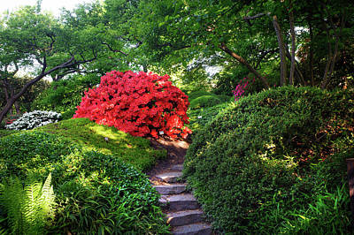 Photograph - Rhododendrons Blooms In Japanese Garden 7. Prague by Jenny Rainbow