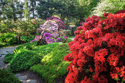Photograph - Rhododendrons Blooms In Japanese Garden 9. Prague by Jenny Rainbow