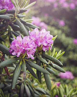 Flower Photograph - Rhododendrons For Days by Heather Applegate