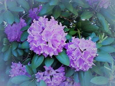 Photograph - Rhododendrons by Glenda Barrett