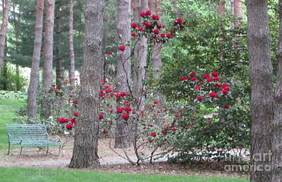 Photograph - Rhododendrons In Lorain County by Kathie Chicoine