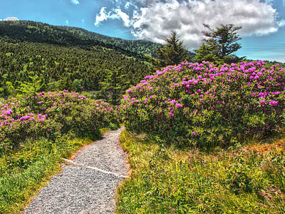Photograph - Rhododendrons On The At by Kevin Senter