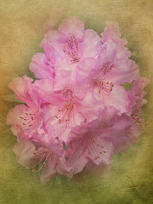Photograph - Rhododendrun - 365-188 by Inge Riis McDonald