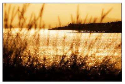 Colwyn Bay Photograph - Rhos Point Viewed Through Beach Grass by Mal Bray
