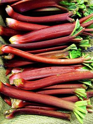Winter Animals - Rhubarb at the Farmers Market by Rebecca Renfro