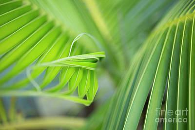 Rhythm Of A Palm Frond Art Print by Charmian Vistaunet