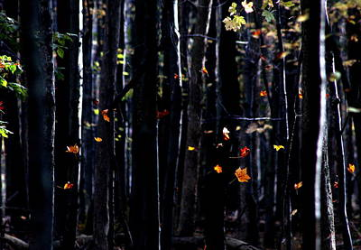 Photograph - Rhythm Of Leaves Falling by Bruce Patrick Smith
