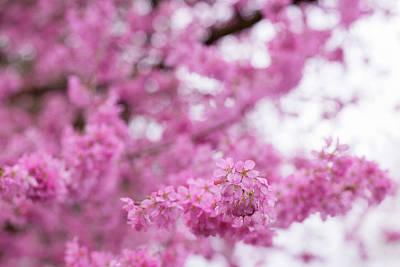 Photograph - Rhythms Of Spring by Kunal Mehra