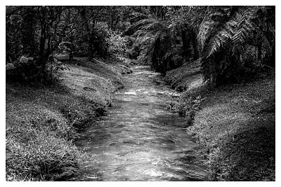 Photograph - Riacho-horto-parque Estadual-campos Do Jordao-sp by Carlos Mac