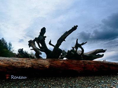 Photograph - Rialto Beach Driftwood 1 by Sadie Reneau