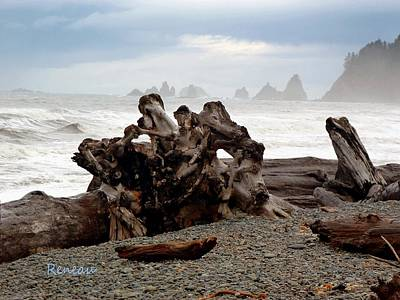Photograph - Rialto Beach Driftwood 2 by Sadie Reneau
