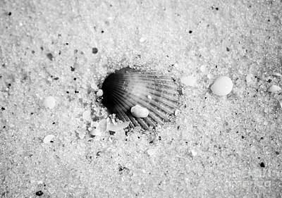 Photograph - Ribbed Sea Shell Macro Buried In Fine Wet Sand Black And White by Shawn O'Brien