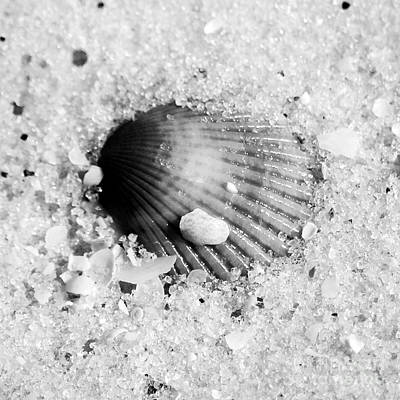 Photograph - Ribbed Sea Shell Macro Buried In Fine Wet Sand Square Format Black And White by Shawn O'Brien